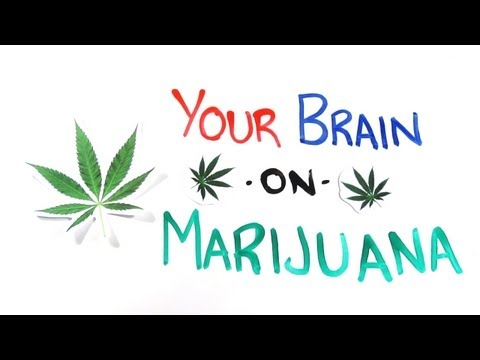 「大麻對腦袋的作用」- Your Brain on Drugs: Marijuana