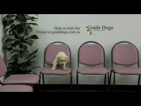 「電視廣告六十秒:導盲犬面試」- Guide Dogs Interviews: Sixty Seconds TVC