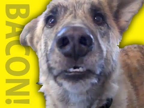 「狗狗的心聲」- Ultimate Dog Tease