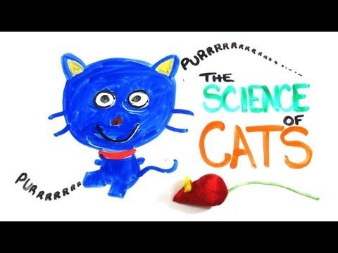 「貓咪科學」- The Science of Cats