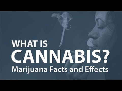 「大麻的真相」- Marijuana Facts and Effects
