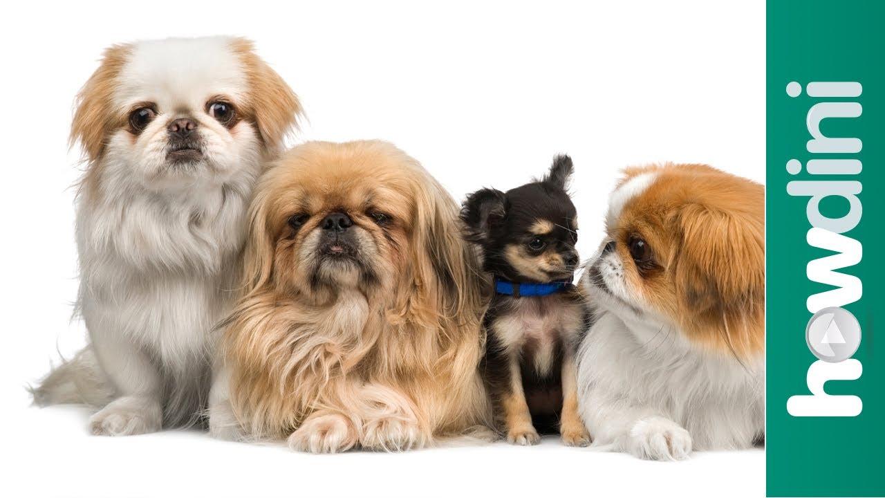 「新手養狗狗:如何選擇適合自己的狗?」- How To Choose a Puppy: Tips on How to Pick a Puppy