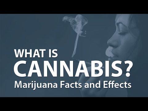 大麻的真相