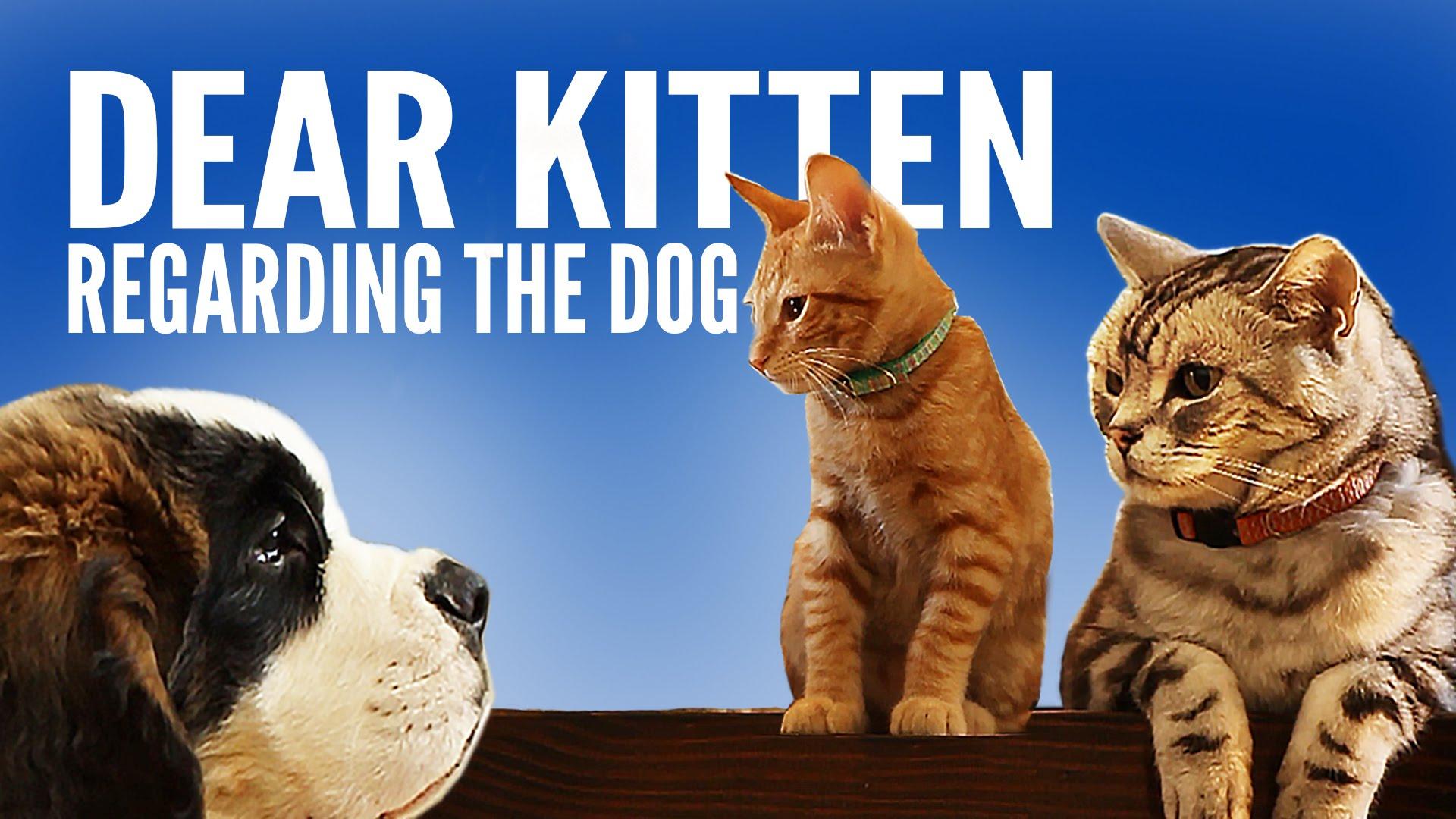 「親愛的小貓:關於那隻笨狗狗...」- Dear Kitten: Regarding The Dog