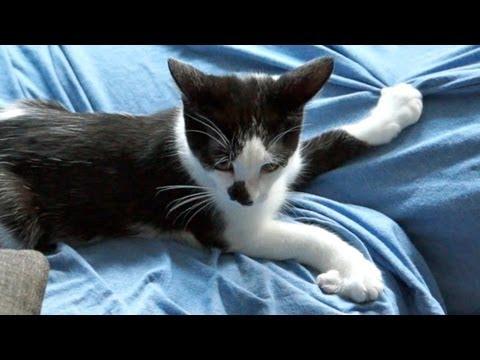 「我家的貓咪不抓家具」- How to get your cat to stop scratching the furniture