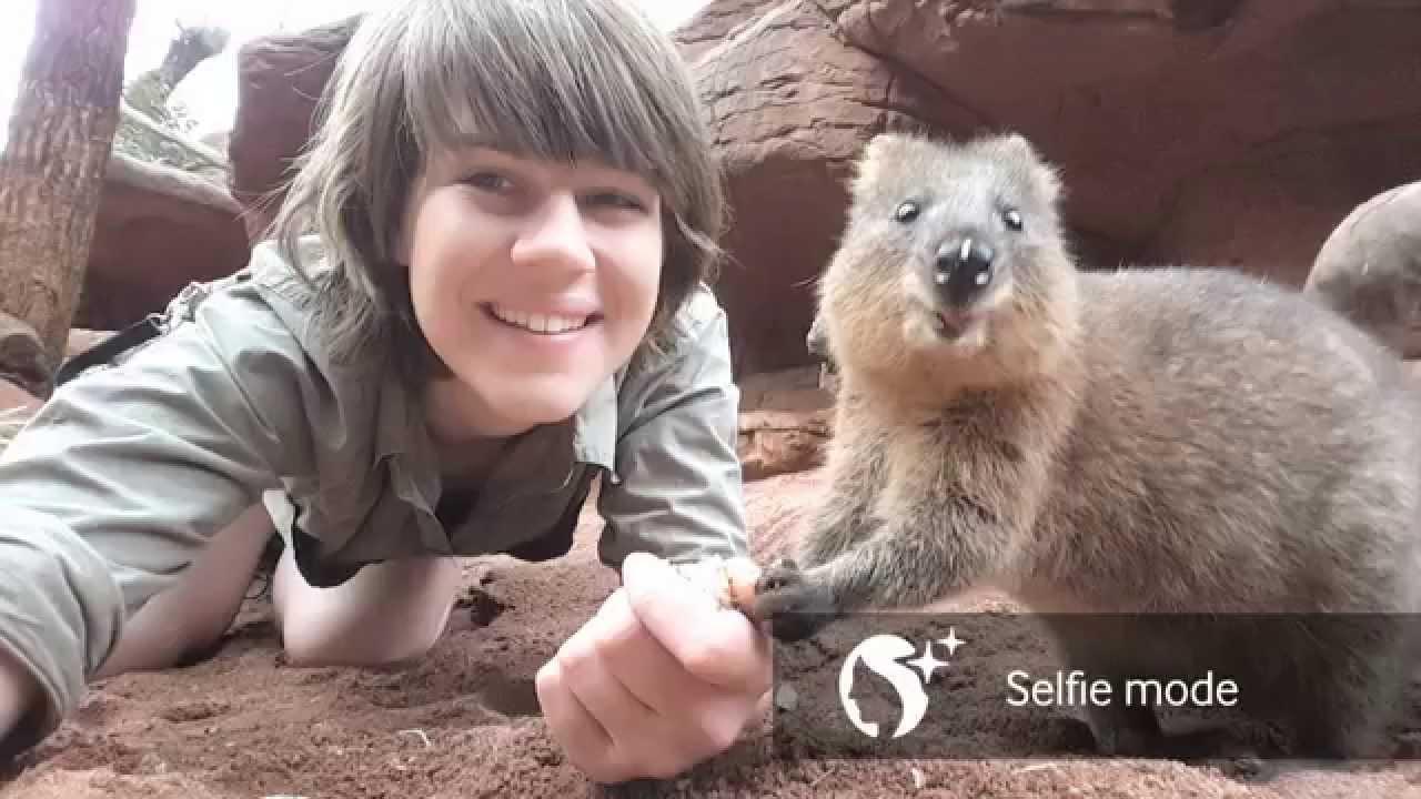 短尾矮袋鼠,微笑小 Quokka 來啦!