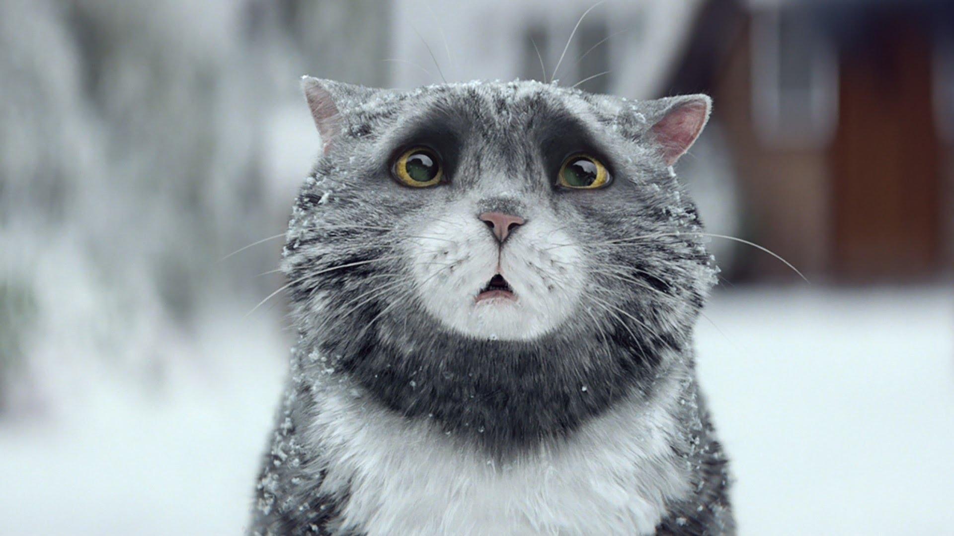 「暖心耶誕廣告:糊塗貓莫可的聖誕大災難」- Mog's Christmas Calamity