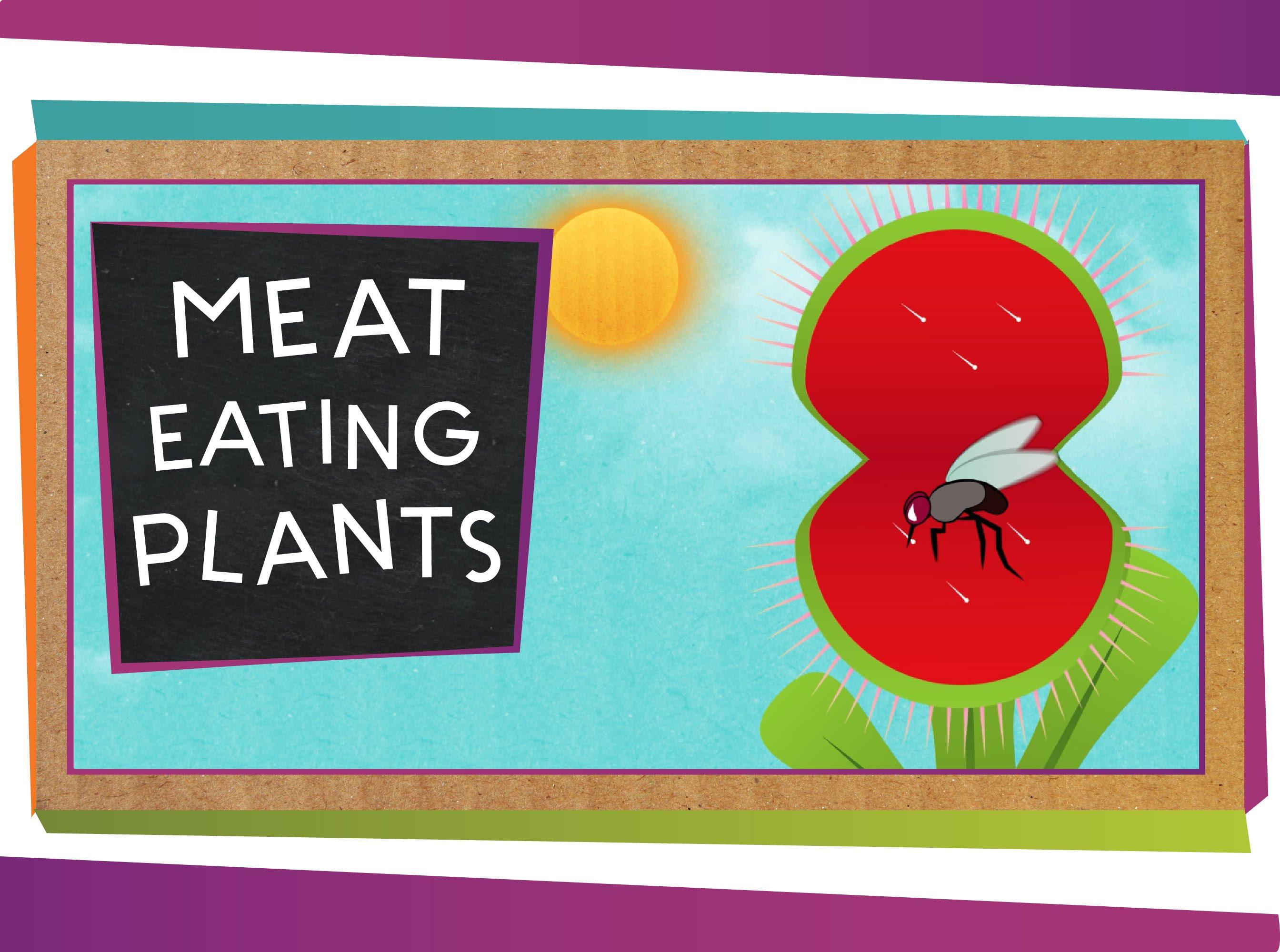 「常被小看的昆蟲殺手:食肉植物」- Meat-Eating Plants