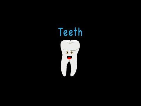 「一首歌教你身體器官:牙齒篇」- Teeth Song