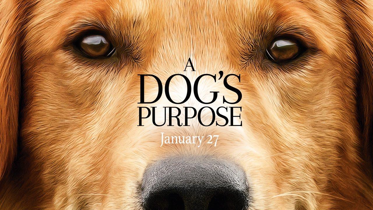 「預告片就讓人噴淚!超溫馨的《為了與你相遇》來囉」- A Dog's Purpose