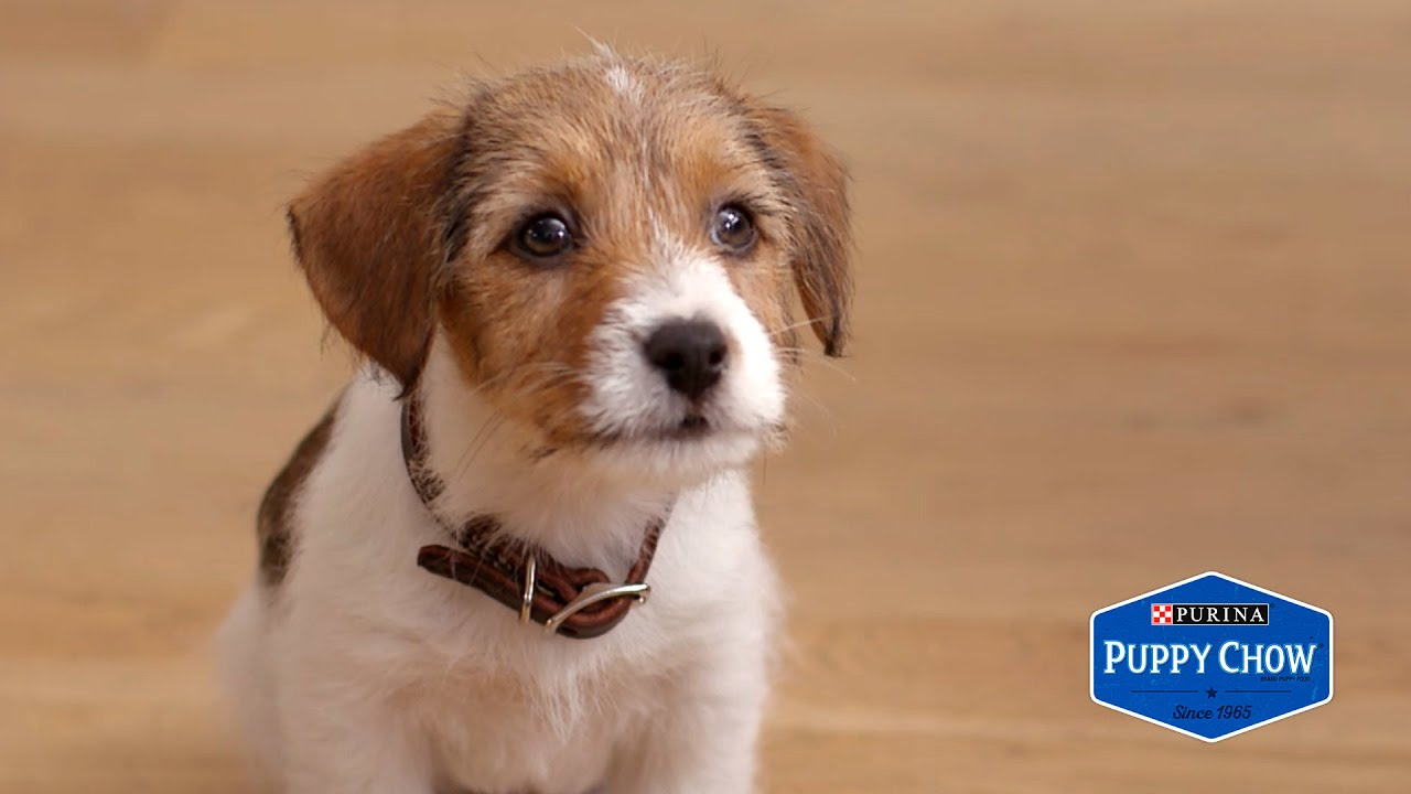 焦慮又熱情的小狗狗與主人度過的一天
