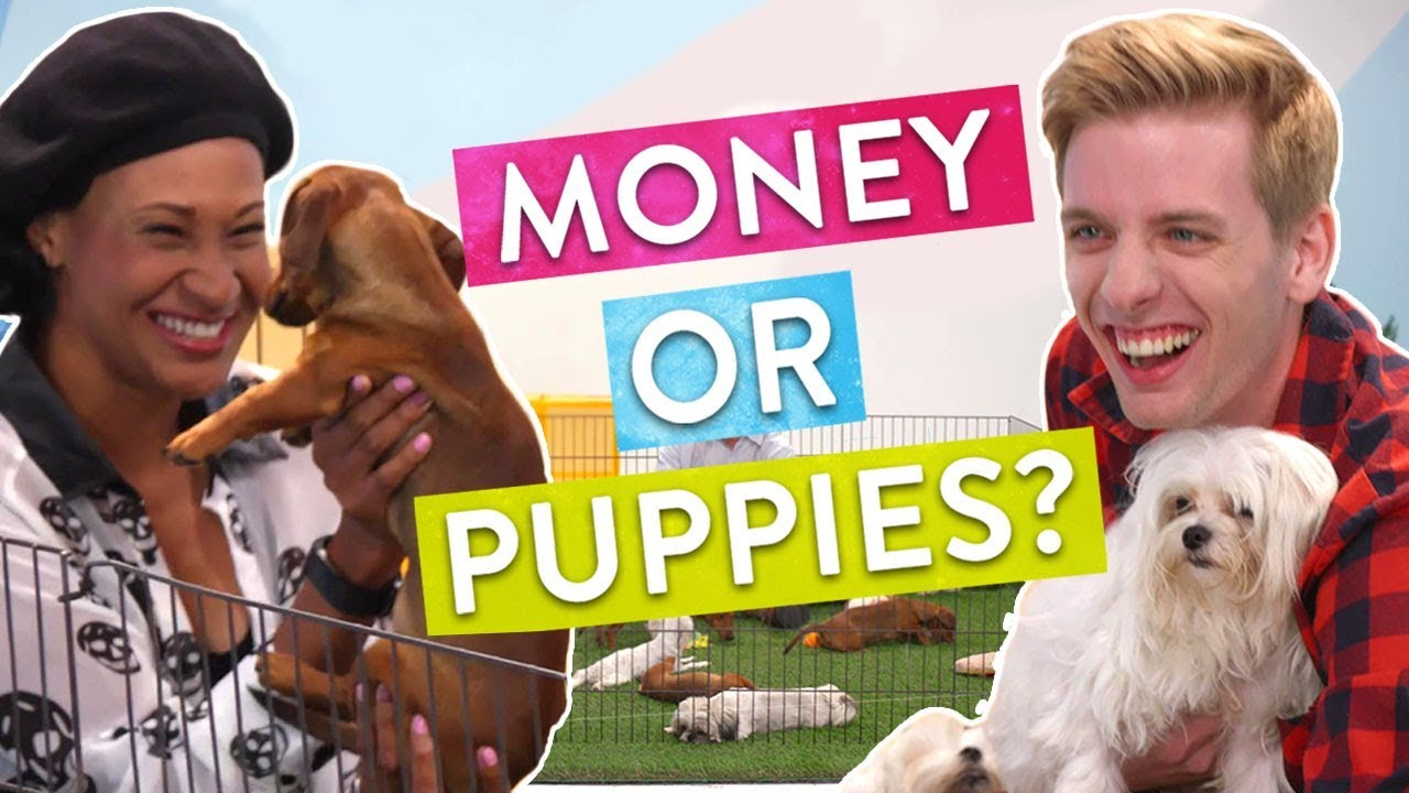 「【慷慨科學】你選擇金錢還是給予他人快樂的時光?」- People Choose between Money or Puppies: The Science of Generosity