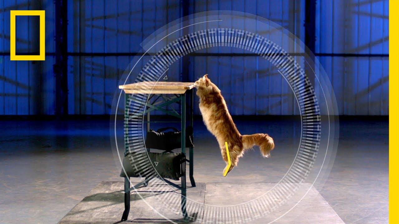 「【無厘頭科學研究所】有沒有貓咪很笨的八卦?」- Science of Stupid: Cats vs. Gravity